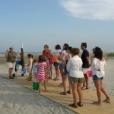 Cape May County, NJ Events: Beachcombing the Crest of Wildwood