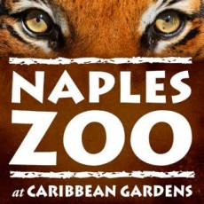 Fort Myers, FL Events: See What's Happening at the Zoo