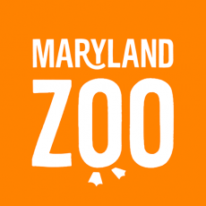 Things to do in Laurel-Columbia, MD for Kids: Zoo Bop 2018, The Maryland Zoo in Baltimore