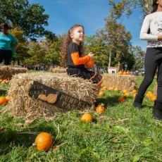 Things to do in Eastern Main Line, PA for Kids: Pumpkin Patch, Franklin Square