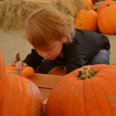 Things to do in Wesley Chapel-Lutz, FL for Kids: Pumpkin Patch, Seal Swim School - Lutz and Wesley Chapel