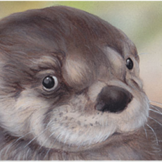 Book Signing: Little Otter Learns to Swim