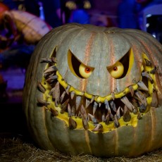 Things to do in Phoenix North, AZ for Kids: 4th Annual Enchanted Pumpkin Garden, Cave Creek