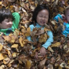 Eastern Main Line, PA Events: Tall Trees Nature Playdate