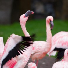 Things to do in Beaverton, OR for Kids: Second Tuesday HalfPrice Day, Oregon Zoo