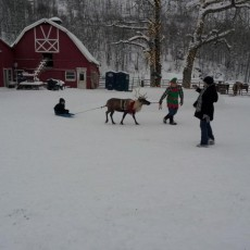 Things to do in Anchorage, AK for Kids: Christmas on the Farm, Williams Reindeer Farm