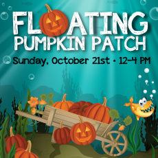 Things to do in Burbank, CA: Floating Pumpkin Patch