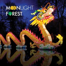 Moonlight Forest - Lantern Art Festival