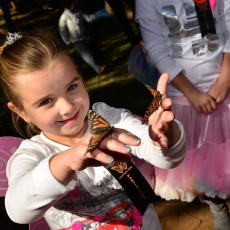 Things to do in Southlake-Keller, TX for Kids: 21st Annual Butterfly Flutterby, Grapevine Botanical Gardens