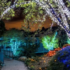 Things to do in Richmond West End, VA for Kids: GARDENFEST OF LIGHTS ILLUMINATION WEEKEND, Lewis Ginter Botanical Garden