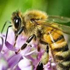 Things to do in Myrtle Beach, SC for Kids: Honey Bees and Your Environment, Myrtle Beach State Park