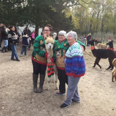 Things to do in Cape May County, NJ for Kids: Alpaca Holiday Photo Shoot Day, Jersey Shore Alpacas