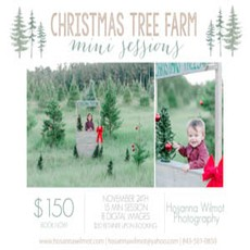 Things to do in Myrtle Beach, SC for Kids: Christmas Tree Farm Mini's, Hosanna Wilmot Photography