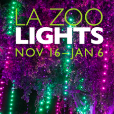 Things to do in Burbank, CA for Kids: L.A. Zoo Lights (Nov 16-Jan 6), Los Angeles Zoo and Botanical Gardens