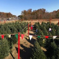 Things to do in Richmond South, VA for Kids: Opening Day!, Holly Berry Christmas Tree Farm