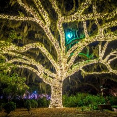 Things to do in Myrtle Beach, SC for Kids: NIGHTS OF A THOUSAND CANDLES 2018, Brookgreen Gardens