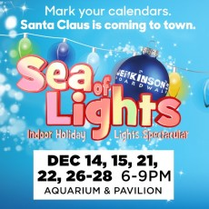 Red Bank, NJ Events for Kids: Sea Of Lights At Jenk's Aquarium!