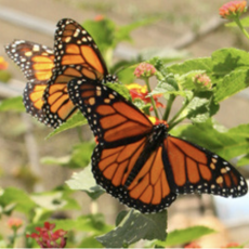 Long Beach, CA Events: Butterfly Pavilion
