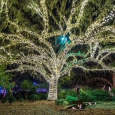 Things to do in Myrtle Beach, SC for Kids: New Year's Eve Stroll Under the Lights, Brookgreen Gardens