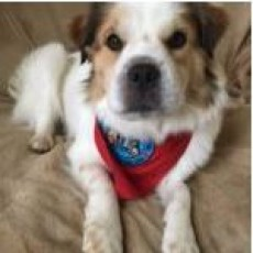 Mason-Westchester, OH Events: PAWS for Reading