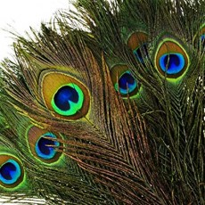 Cincinnati Eastside, OH Events: Sparklers' NIGHT Out (Art & Pizza, Ages 5-9): Birds and Cages